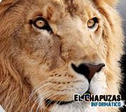 Logo Mac OS X Lion 2
