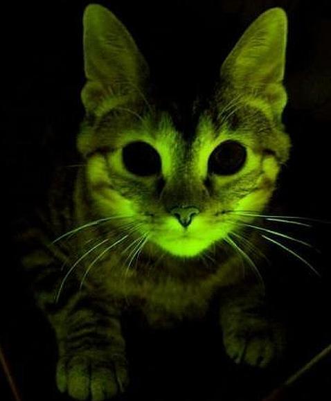 Gato fluorescente 0