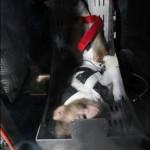 Irán consigue enviar un mono al espacio