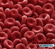 Se inyecta por primera vez sangre cultivada a un humano
