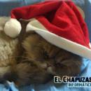 ¡Feliz Navidad a todos los Chapuzas!