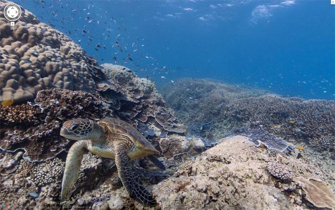 Google Maps nos lleva a las profundidades oceánicas
