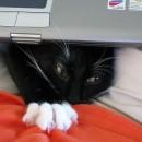 Dell anuncia que sus portátiles no huelen a orina de gato