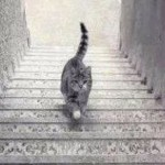 ¿El gato sube o baja la escalera?
