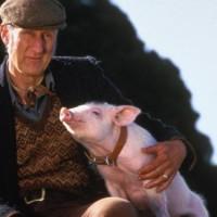 Reino Unido permitiría cultivar órganos humanos en animales