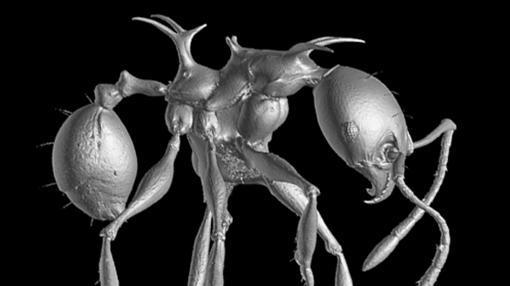 hormigas-juego-tronos
