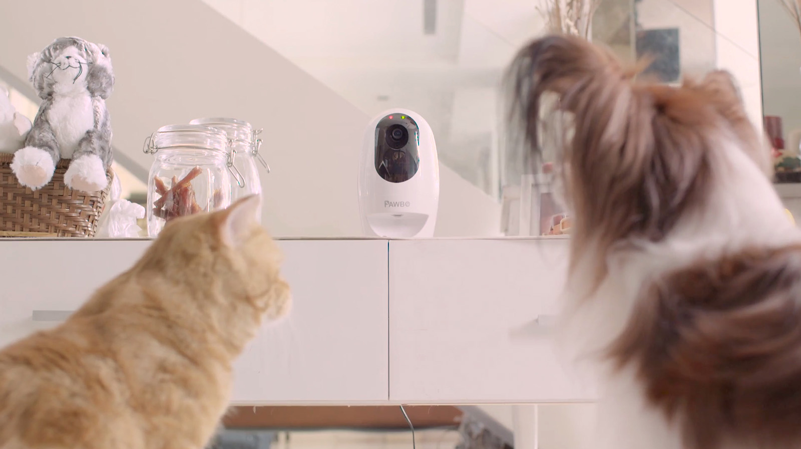 Acer presenta Pawbo+, la cámara interactiva para mascotas