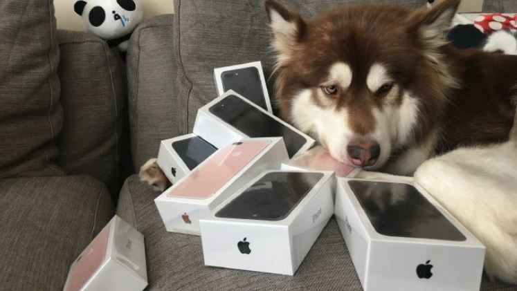 perro-apple-iphone