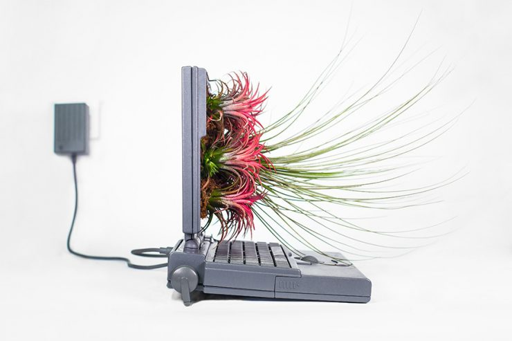 plant-your-mac-apple