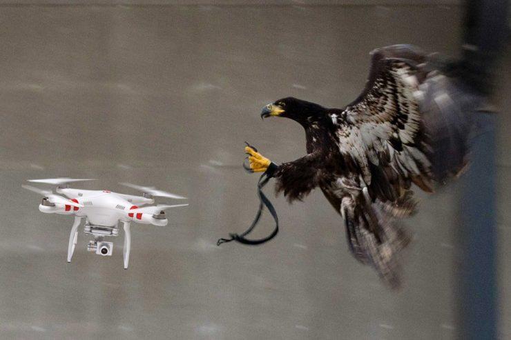 drone aguila 740x493 0