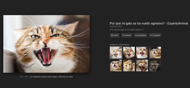 Google Imagenes Ver Imagen 740x342 0