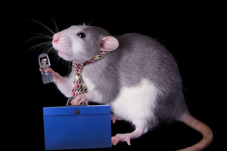 radiación teléfonos móviles 2 740x493 1
