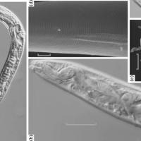 Científicos rusos consiguen revivir a unos gusanos congelados hace 42.000 años