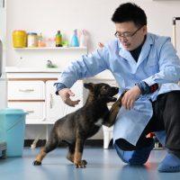 China clonó a un perro policía para aumentar la velocidad de su entrenamiento