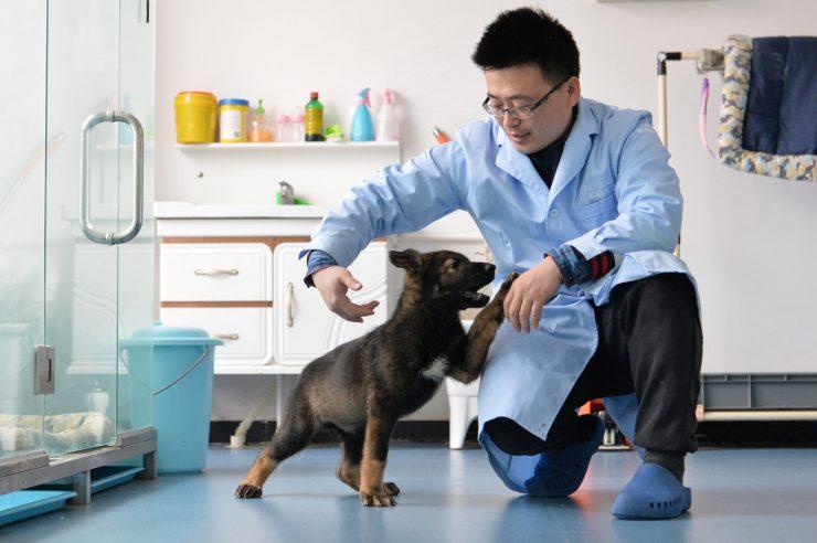 perro clonado china 740x492 0