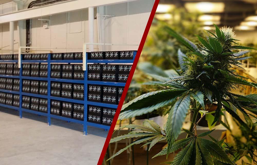 La Policía de Reino Unido realiza una redada en una granja de minería creyendo que era de marihuana